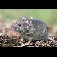 任城区杀虫企业灭鼠企业除四害白蚁防治杀臭虫灭蟑螂企业