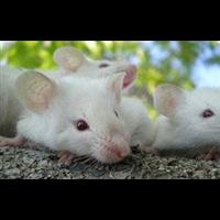 北湖旅游度假区杀虫消毒白蚁防治除虫灭鼠