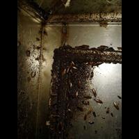 柳州单位宿舍灭蟑螂