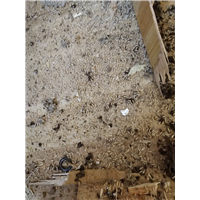 柳州白蚁防治