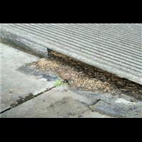 柳州灭白蚁