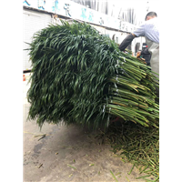 广州鲜花批发7