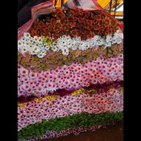 广州鲜花批发11