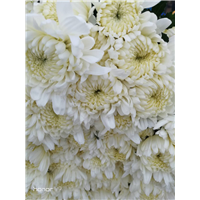 广州鲜花批发6