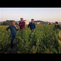 2020陕西油茶苗长期低价出售