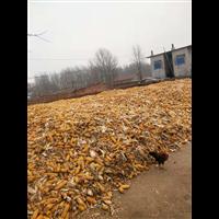 玉米种植2