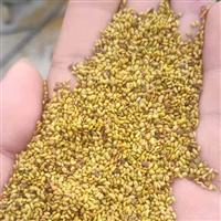 新疆牧草种子苦荞麦