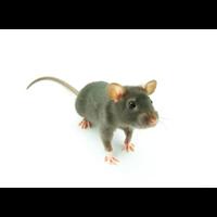 乌鲁木齐灭鼠