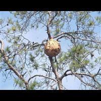 金华灭蟑螂