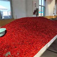 辣椒正宗赤焰辣椒专业种植