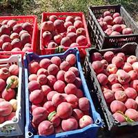可口健康營價值高桃子