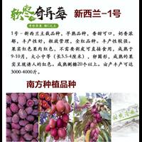 江西奇异莓