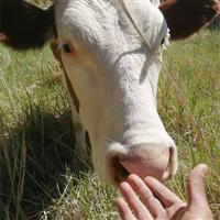 肉牛养殖生态
