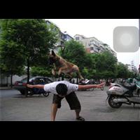 绍兴宠物训练