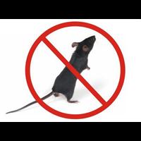 威海公园灭老鼠