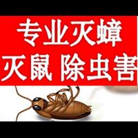 聊城灭蚂蚁饭厅杀虫