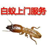 莱芜灭蚂蚁医院除四害