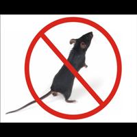 漳州老鼠消杀