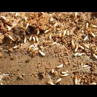 徐州灭蟑螂灭白蚁的企业